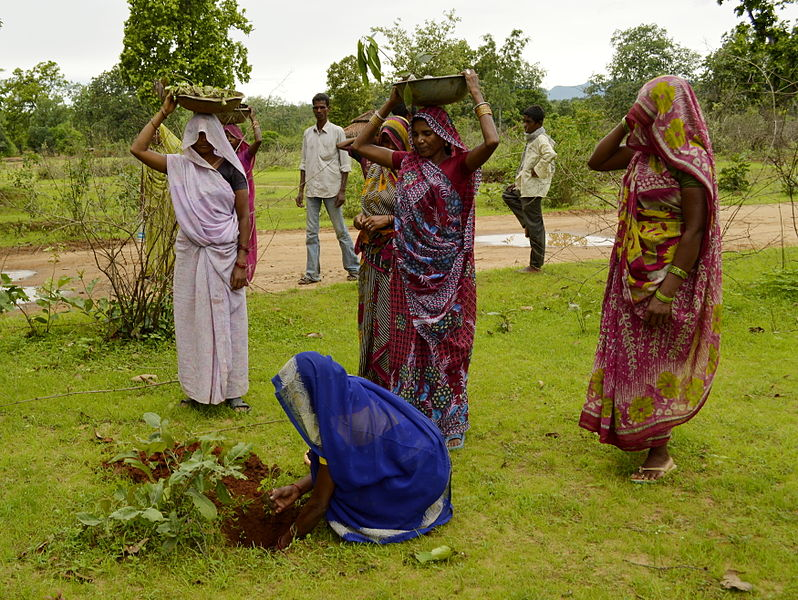 Uttar Pradesh Just Planted 49 Million Trees in a Day. Shouldn't It Get More Than a Guinness World Record?