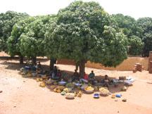 Ghana mango market
