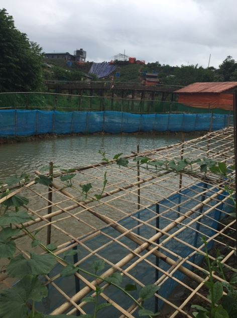 A view of aquaculture in Cox's Bazar